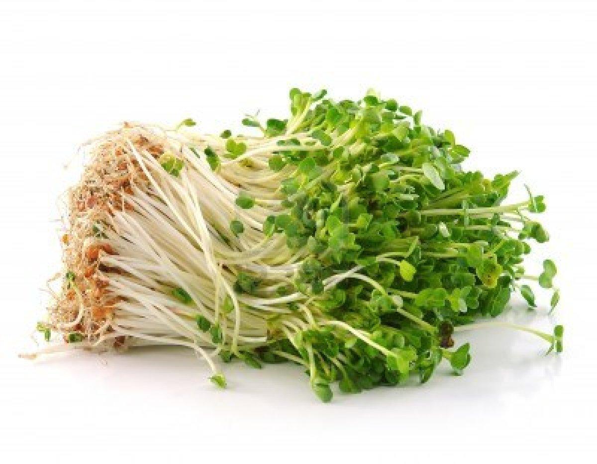 Germogli ricette e diversi tipi dottor sport - Diversi tipi di figa ...