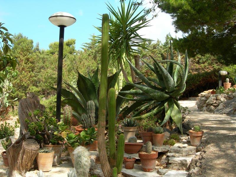 Benefici delle piante in casa dottor sport for Giardini da esterno