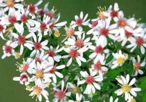 Curare lo stress con i fiori di bach