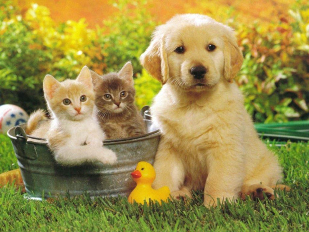 Cibi che fanno male ai cani e agli altri animali dottor for Quali verdure possono mangiare i cani